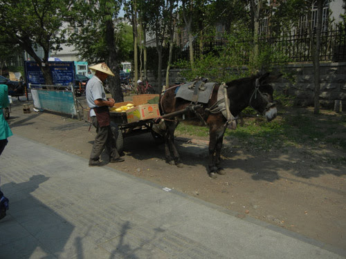 Fruit Vendor and His Donkey in Shenyang, China _ 9266