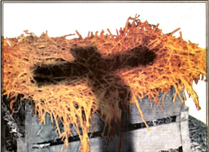 cross -shadow-on-manger - jesus photo