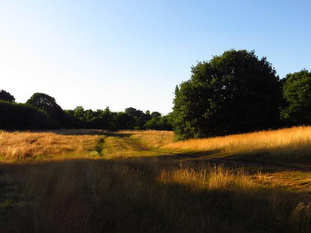 Lower Cohen's Field