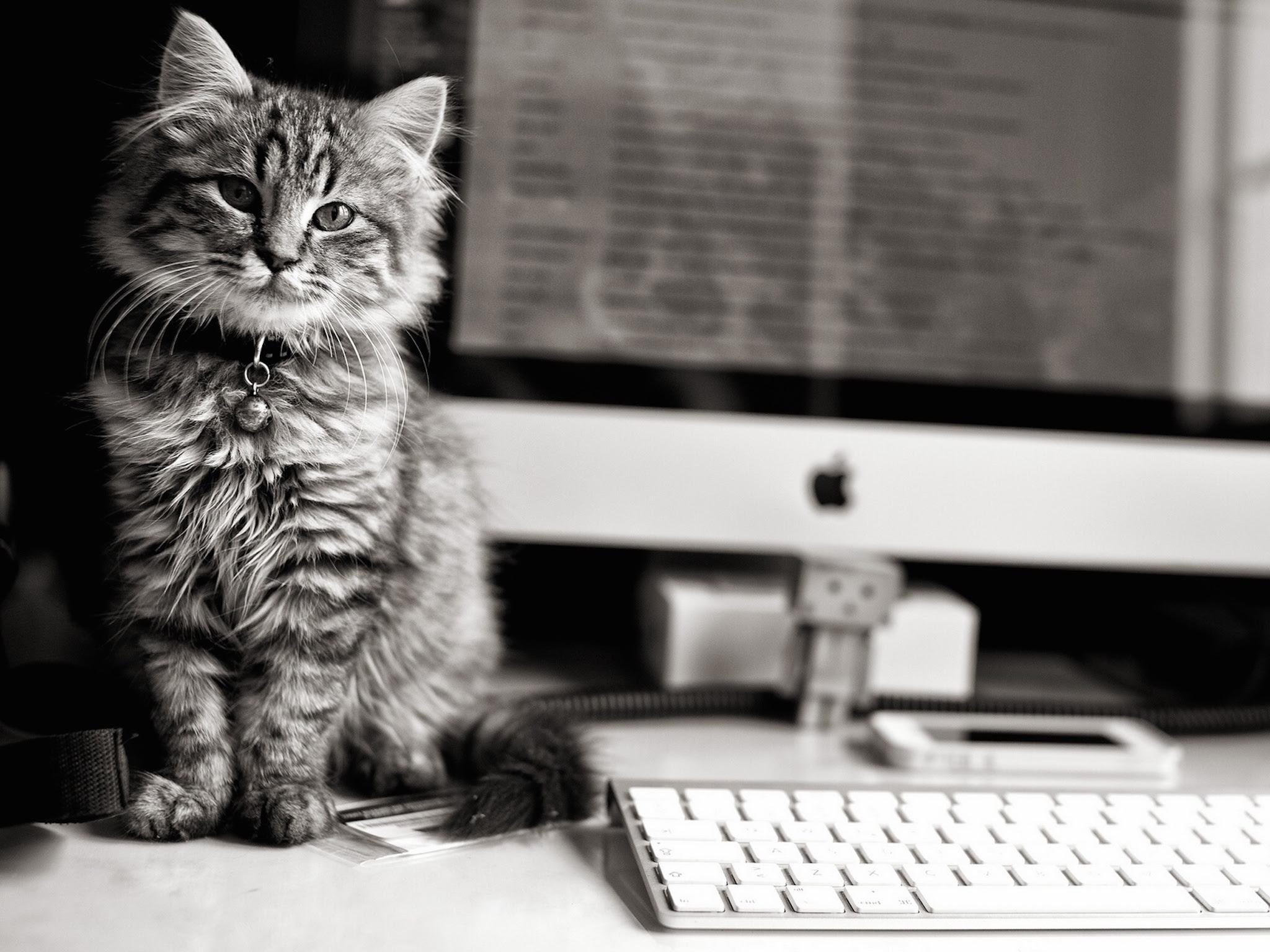 Imac Cat Wallpaper Wallpapergeeks Com