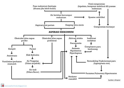 pathway sindrom aspirasi mekonium