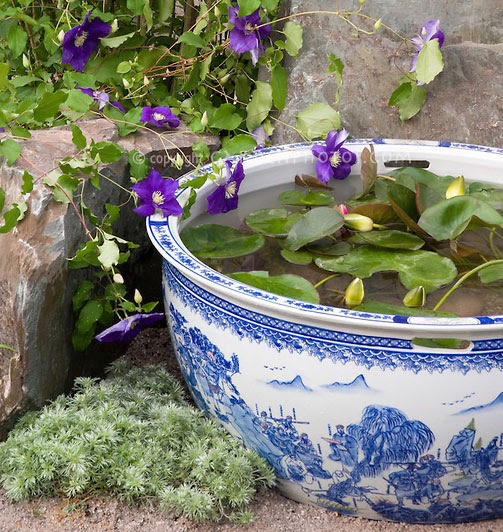 Planting tips & ideas for a container water garden - The Claudia ...