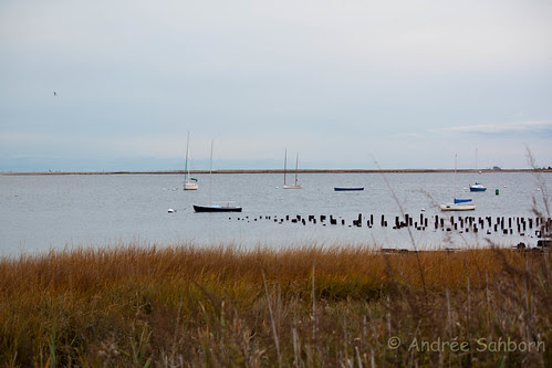 Low Tide at New Haven Harbor at City Point-8.jpg
