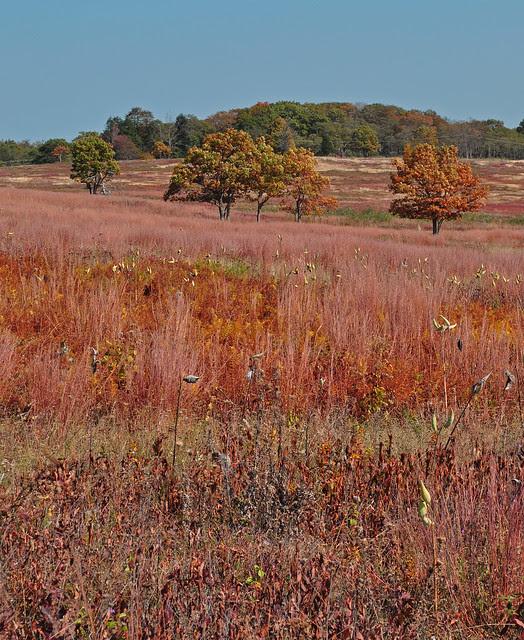 Big Meadows (2)