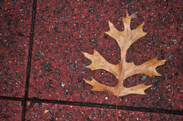 autumn's grasp