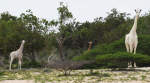 Video: These elusive white giraffes, spotted in Kenya, will leave you amazed