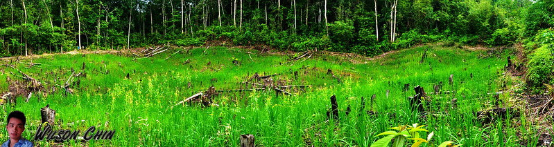 03 - Panorama_gua-silabur-paddy-field
