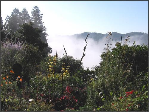 05 wide garden view
