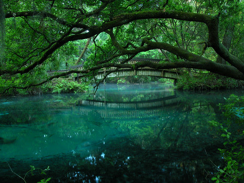 juniper springs por CommonWonderer