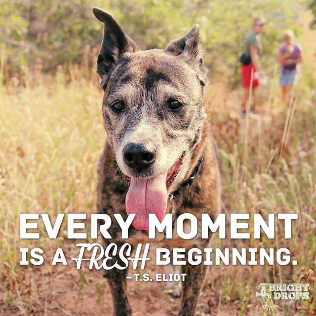 """""""Every moment is a fresh beginning."""" ~T.S. Eliot"""