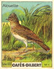 gilbert oiseau 2