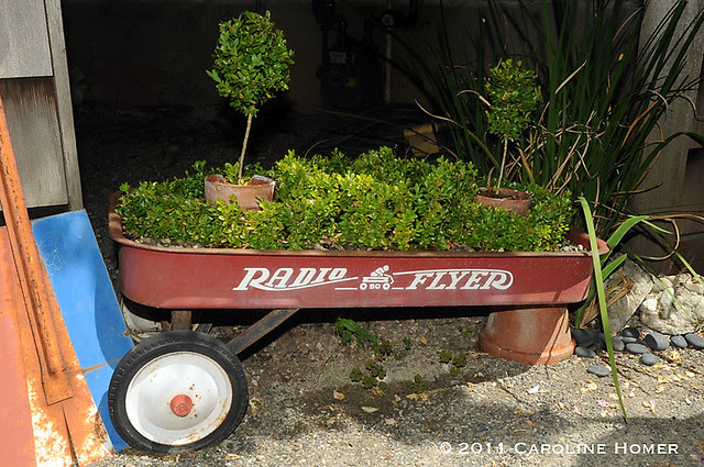 Tiny boxwood knot garden in a Radio Flyer wagon