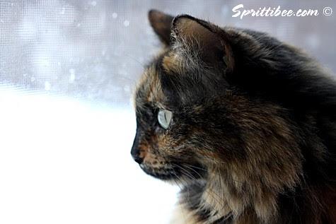 snowwatcher