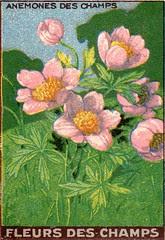 fleurs des champs 8
