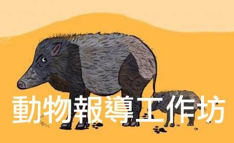 「動物保育」民間報導工作坊