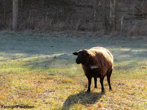 Slowly defrosting in the hayfield (10) - FarmgirlFare.com