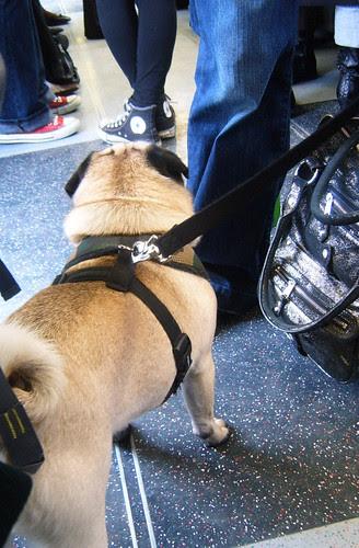 Canine Tube Fashion Victim 2