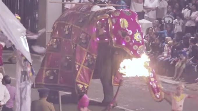 Muere Tikiri, la demacrada elefanta que ocultaba su famélico cuerpo bajo un traje de fiesta