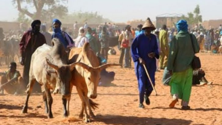 Fulani herdsmen storm Ogun to 'settle and graze'