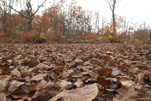 DSC_5143 Autumn leaves