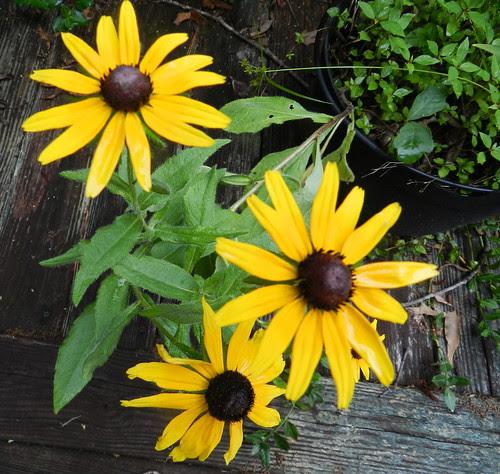 todayflowersDSCN9017