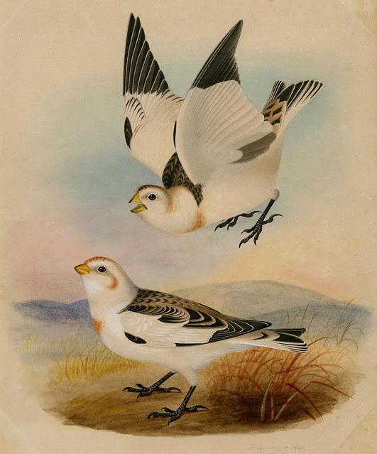 natural history watercolour sketch