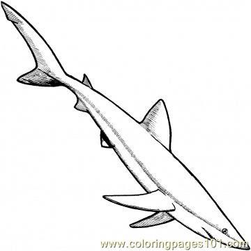 coloring pages slim long shark fish  shark  free