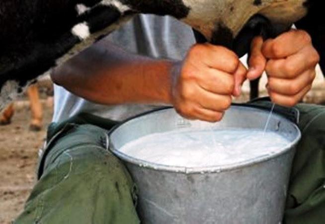 Producción de Leche en Camaguey