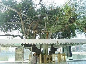 Holy Tree in Sikhism, according to Guru..