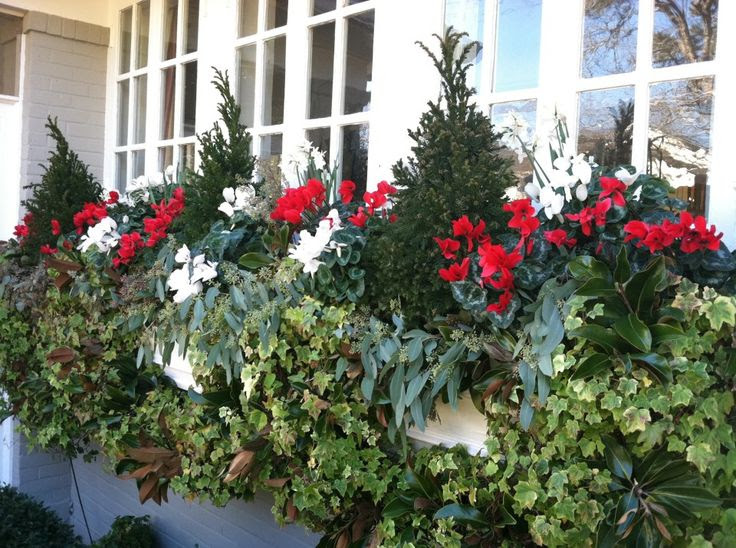 Fill your window boxes with evergreen topiaries, cyclamen, and seeded eucalyptus for a look that will carry you through the winter.
