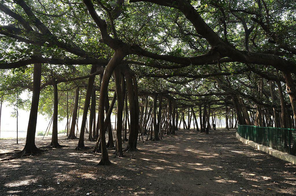 The Great Banyan Tree seluas supermarket