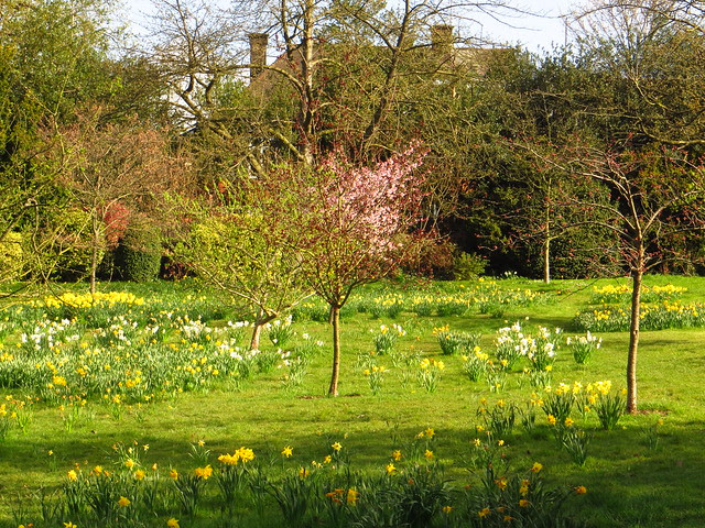 The Orchard in Golders Hill Park