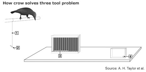 Inforgraphic showing tool-use set up