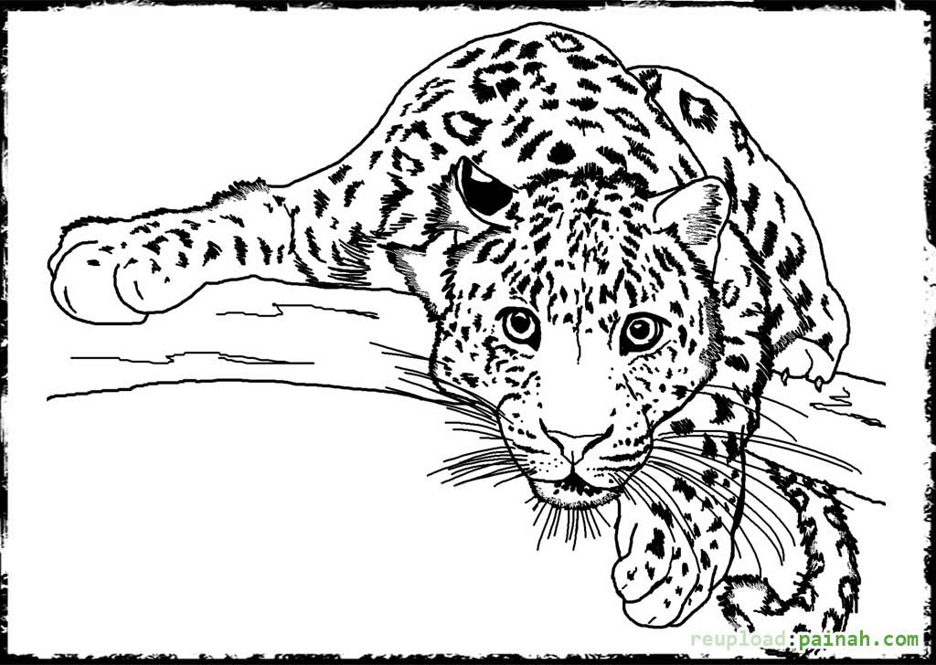 Animal Pattern Colouring Pages Coloring And Drawing
