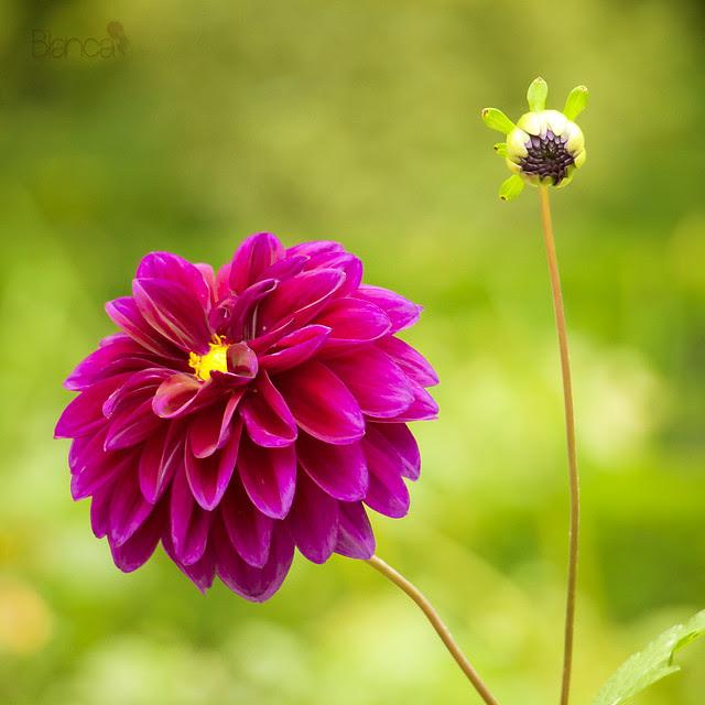 Une fleur pour un sourire