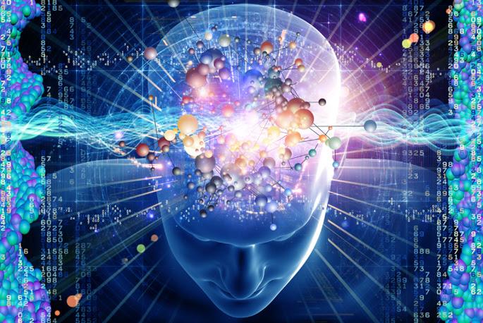 """Résultat de recherche d'images pour """"real human brain"""""""