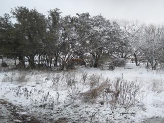 December 2015 Snow 8