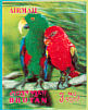 Eclectus Parrot Eclectus roratus