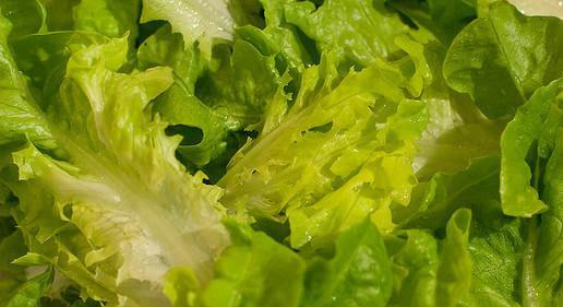 lattuga proprietà Lattuga: perché fa bene mangiarla e come preparare un delizioso frullato