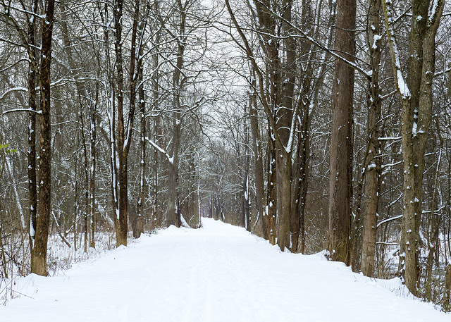 Towpath in Snow