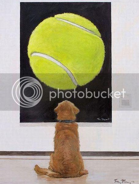 perro con pelota, pelota de tenis perro, perro mirando pelota, cuadro perro mira pelota