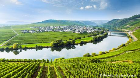Mosel Fluß Tal Weinberg
