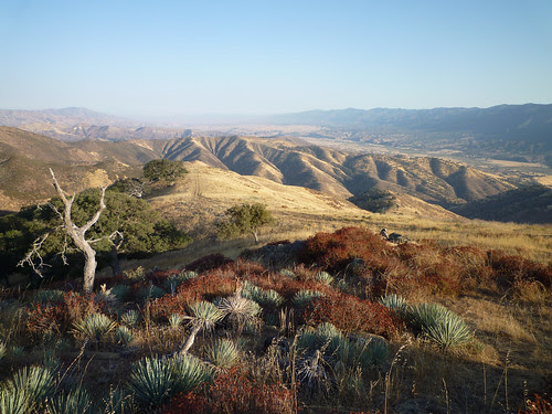 looking out the cuyama valley