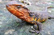 Bukti Kekayaan Hayati, 115 Spesies Baru Ditemukan di Asia Teng   gara