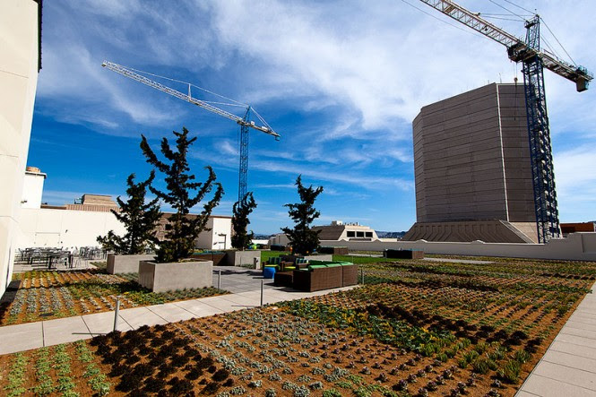 City Rooftop Garden