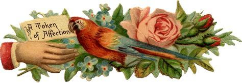 Victorian Scrap Hand with Parrot   The Graphics Fairy