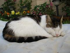 Oimo naps in the garden