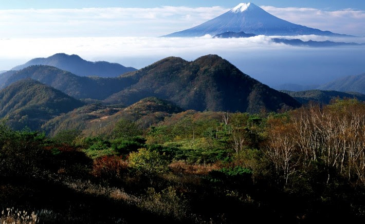 Aokigahara Suicide Forest |
