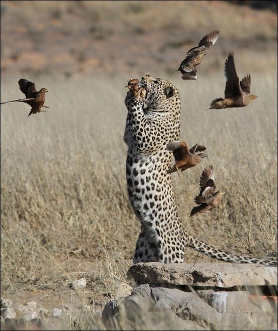 Cemilan Macan