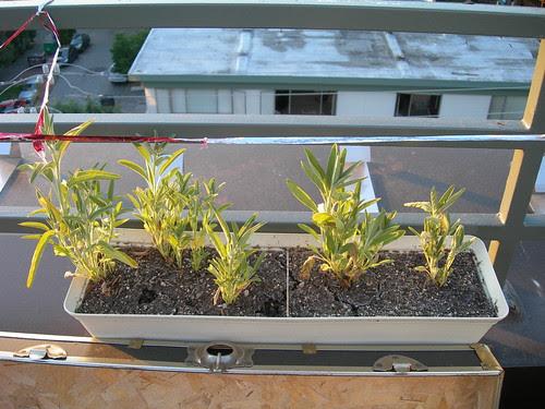2009-07-03 Sage Comparison (3)